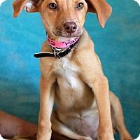 Adopt A Pet :: Rudee - Waldorf, MD