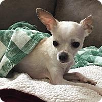 Adopt A Pet :: Finnie - Windermere, FL