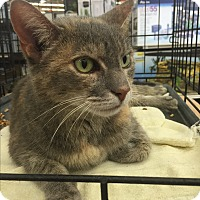 Adopt A Pet :: Wilma  $20 - Lincolnton, NC