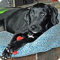 Adopt A Pet :: Boston - Aurora, CO