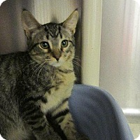 Adopt A Pet :: Randy - Grand Junction, CO