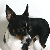 Adopt A Pet :: Nicky - Redding, CA