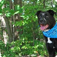 Adopt A Pet :: Jack Black - New Castle, PA
