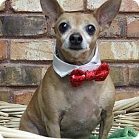 Adopt A Pet :: Buster - Benbrook, TX