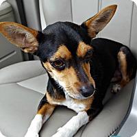 Adopt A Pet :: Bobbi - Kimberton, PA