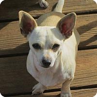 Adopt A Pet :: CHIQUITA - Williston Park, NY