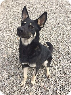German Shepherd Dog Mix Dog for adoption in Concord, California - Beatrice