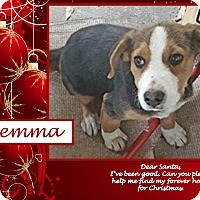 Beagle Mix Puppy for adoption in Ringwood, New Jersey - Gemma