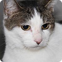 Adopt A Pet :: April (Spayed) - Marietta, OH