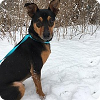 Adopt A Pet :: Oliver is in Rhode Island! - Plainfield, CT