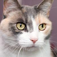 Adopt A Pet :: MAYLA - Royal Oak, MI