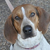 Adopt A Pet :: Fanny - Atlanta, GA