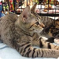 Adopt A Pet :: Sissy - Vero Beach, FL