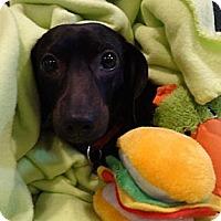 Adopt A Pet :: NAYA - Portland, OR