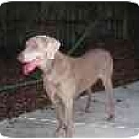 Adopt A Pet :: Hunter - Eustis, FL