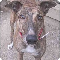 Adopt A Pet :: Jena (Jena Dazzling) - Chagrin Falls, OH
