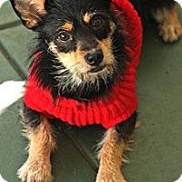 Adopt A Pet :: Alma - san diego, CA