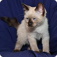 Adopt A Pet :: Sammi - Davis, CA