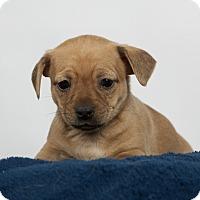 Adopt A Pet :: Hunter - Nuevo, CA