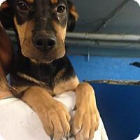 Adopt A Pet :: PLUTO - Pompton lakes, NJ