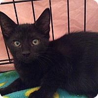 Adopt A Pet :: Harper - Acme, PA