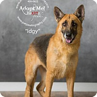 Adopt A Pet :: Idgy - Montgomery, AL