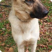 Adopt A Pet :: Fergie - Louisville, KY