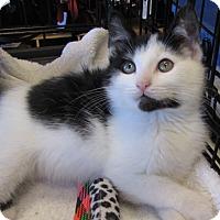 Adopt A Pet :: Buster - Berkeley Hts, NJ