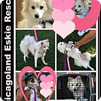 Adopt A Pet :: Tandy - Elmhurst, IL