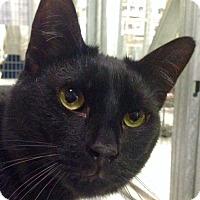 Adopt A Pet :: Bobbi - Redwood City, CA