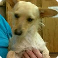 Adopt A Pet :: Cooper - Abilene, TX