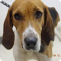 Adopt A Pet :: Cain - Gulfport, MS