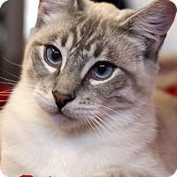 Adopt A Pet :: Oliver - Sarasota, FL
