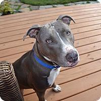 Adopt A Pet :: Roxanne - Reisterstown, MD