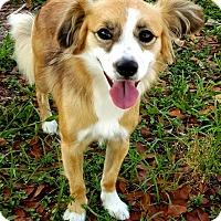 Adopt A Pet :: Bimini - Key Largo, FL