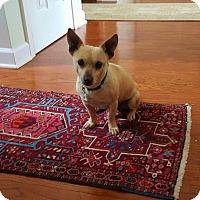 Adopt A Pet :: Prince - Alpharetta, GA