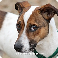 Terrier (Unknown Type, Medium) Mix Dog for adoption in Conyers, Georgia - Zeus