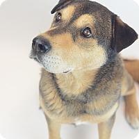 Adopt A Pet :: BRADLEY - Memphis, TN