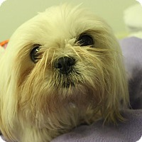 Adopt A Pet :: Franchesca - Brattleboro, VT