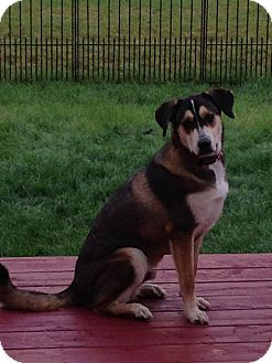 Husky Mix Dog for adoption in Quincy, Indiana - Splash
