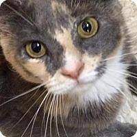 Adopt A Pet :: Zoe - Furlong, PA