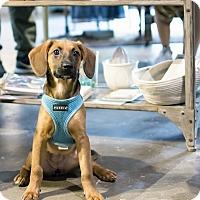 Adopt A Pet :: Aimee Mann - Jersey City, NJ