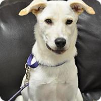 Adopt A Pet :: Pink - Pacific, MO