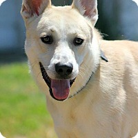 Shepherd (Unknown Type) Mix Dog for adoption in Henderson, Kentucky - dex