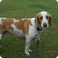 Adopt A Pet :: henry - haslet, TX
