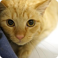 Adopt A Pet :: Ed - Tucson, AZ