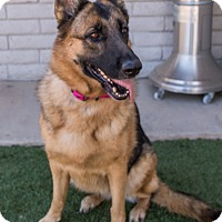 Adopt A Pet :: Roxie - Phoenix, AZ