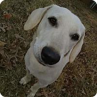 Adopt A Pet :: Trevour - Hanover, PA