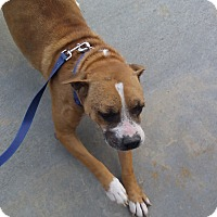 Boxer Mix Dog for adoption in Manhattan, Kansas - Sissy