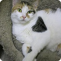 Adopt A Pet :: Tallia - Baton Rouge, LA